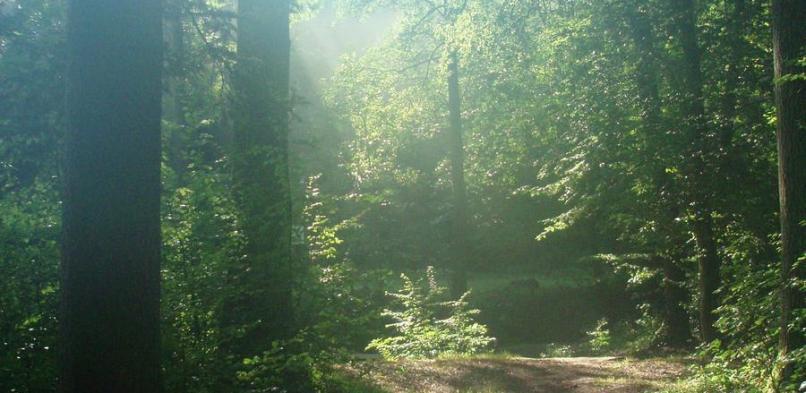 Cestička k tábořišti
