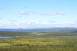Utsikt över palsmyrarna V Pulsujärvi.