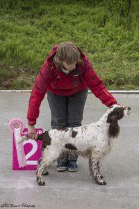 BIS2 veteran engelsk springer spaniel NO SE Uch Finnlidens Autumn Choisse. Kristina Dahlberg, Sverige