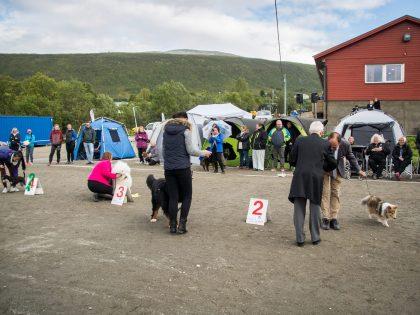 ABSOLUTT SISTE: Dommerliste Tromsø Hundeklubb og NKK Tromsø 2018