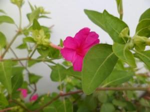 Chúm chím nụ hoa xinh