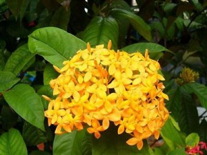Trang màu vàng