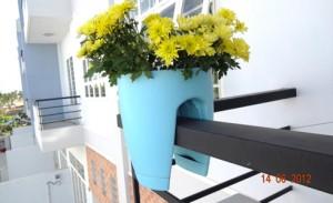 hoa, kiểng lá
