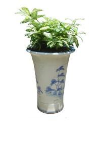 Trúc Nhật đốm trồng trong chậu men trúc- chậu cây gọn, thích hợp cho những góc hẹp