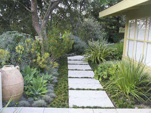 Che kín mặt đất với thảm thực vật phong phú