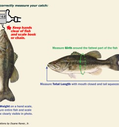 sponsor published newspaper or magazine website with official results including your name and verified weight of the individual fish along with the  [ 1008 x 792 Pixel ]