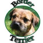 Dog – terrier
