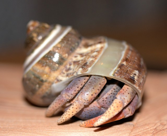 Complete Hermit Crab Food List 3
