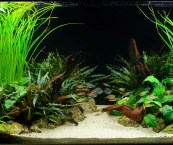best plants for tropical fish tank