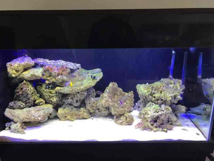Image result for aquarium fish tank rock