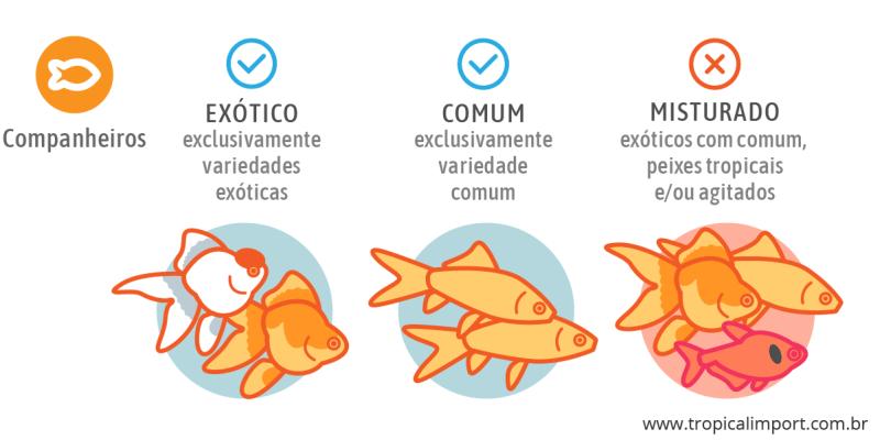 Companheiros para o aquário de kinguios