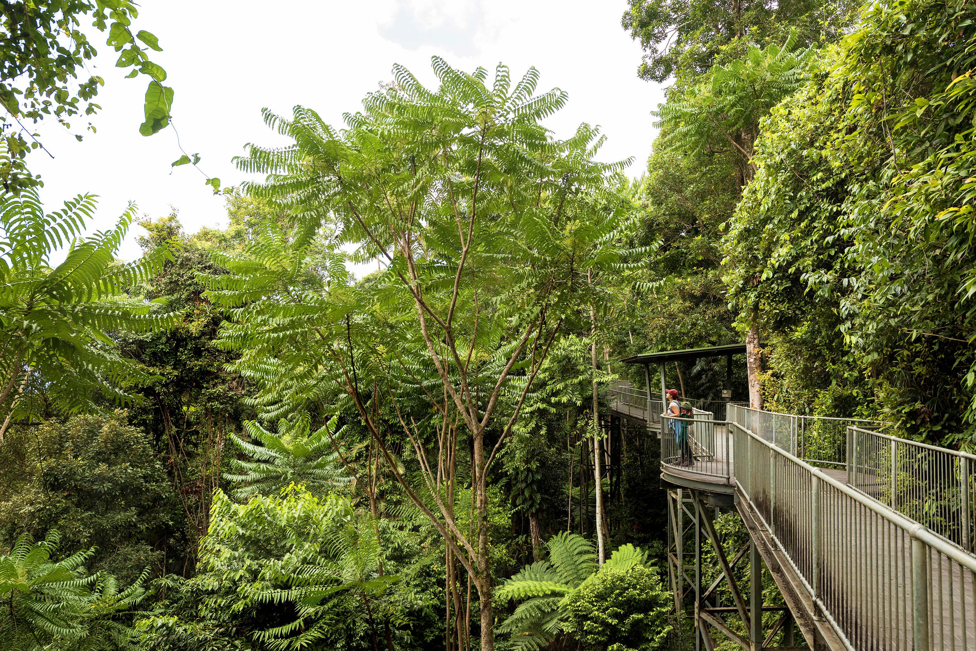 10 Facts About The Wet Tropics Rainforest