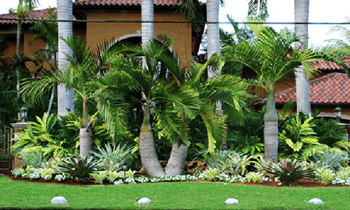 tropicalway east landscaping services