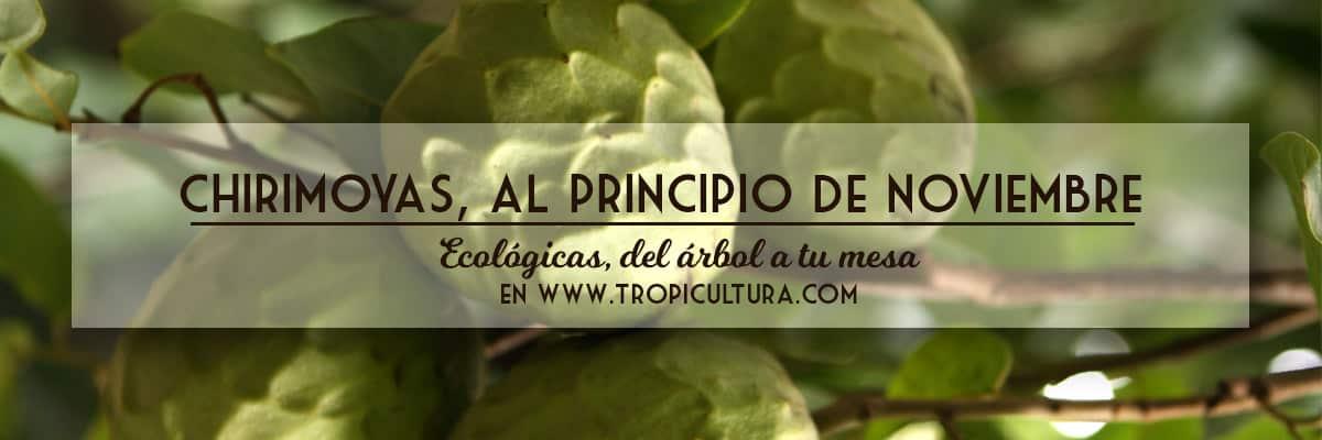 fruta ecológica en su punto óptimo de maduración