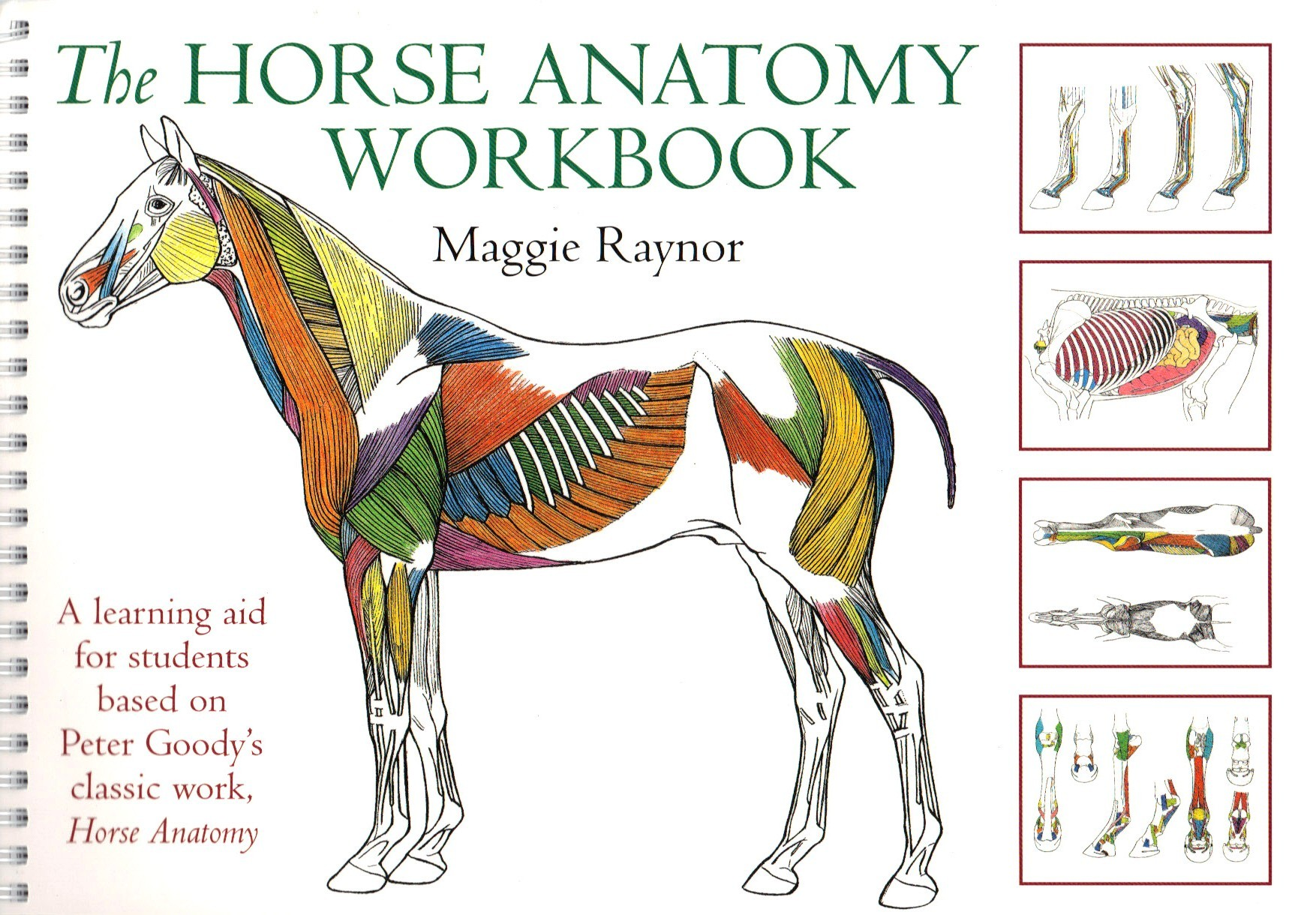 The Horse Anatomy Workbook By Maggie Raynor