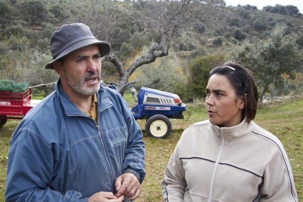 LOLI Y MANOLO EXPLICANDO EL VAREADO DE LOS OLIVOS