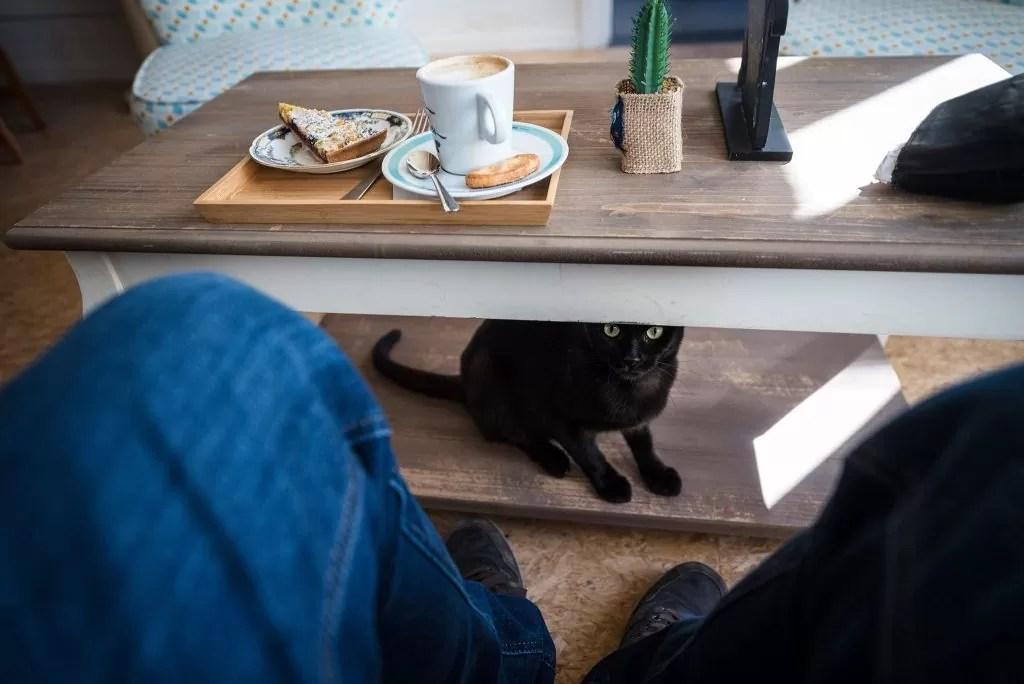 kattencafe brugge