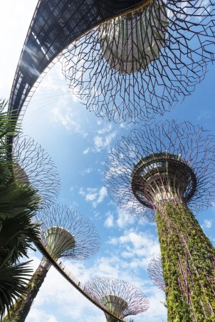 supertrees in Gardens by the bay singapore