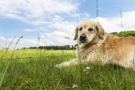 Middenvijver Linkeroever Labrador
