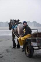 Wat te doen in Koksijde garnaalvisser te paard