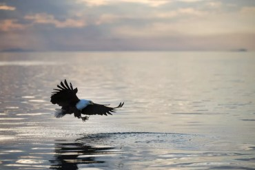 Lake Malawi-7