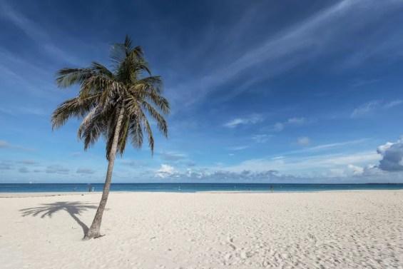 Eenzame palmboom op Eagle Beach Aruba