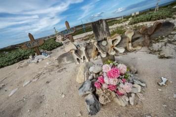 Pet Cemetery Aruba