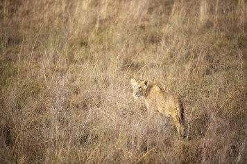 Nairobi National Park © Jonathan Ramael-17
