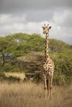 Nairobi National Park © Jonathan Ramael-20