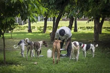 Man voert de straathonden in Lodi Garden