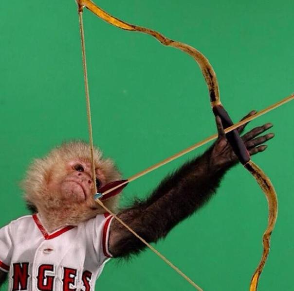 arrow-monkey