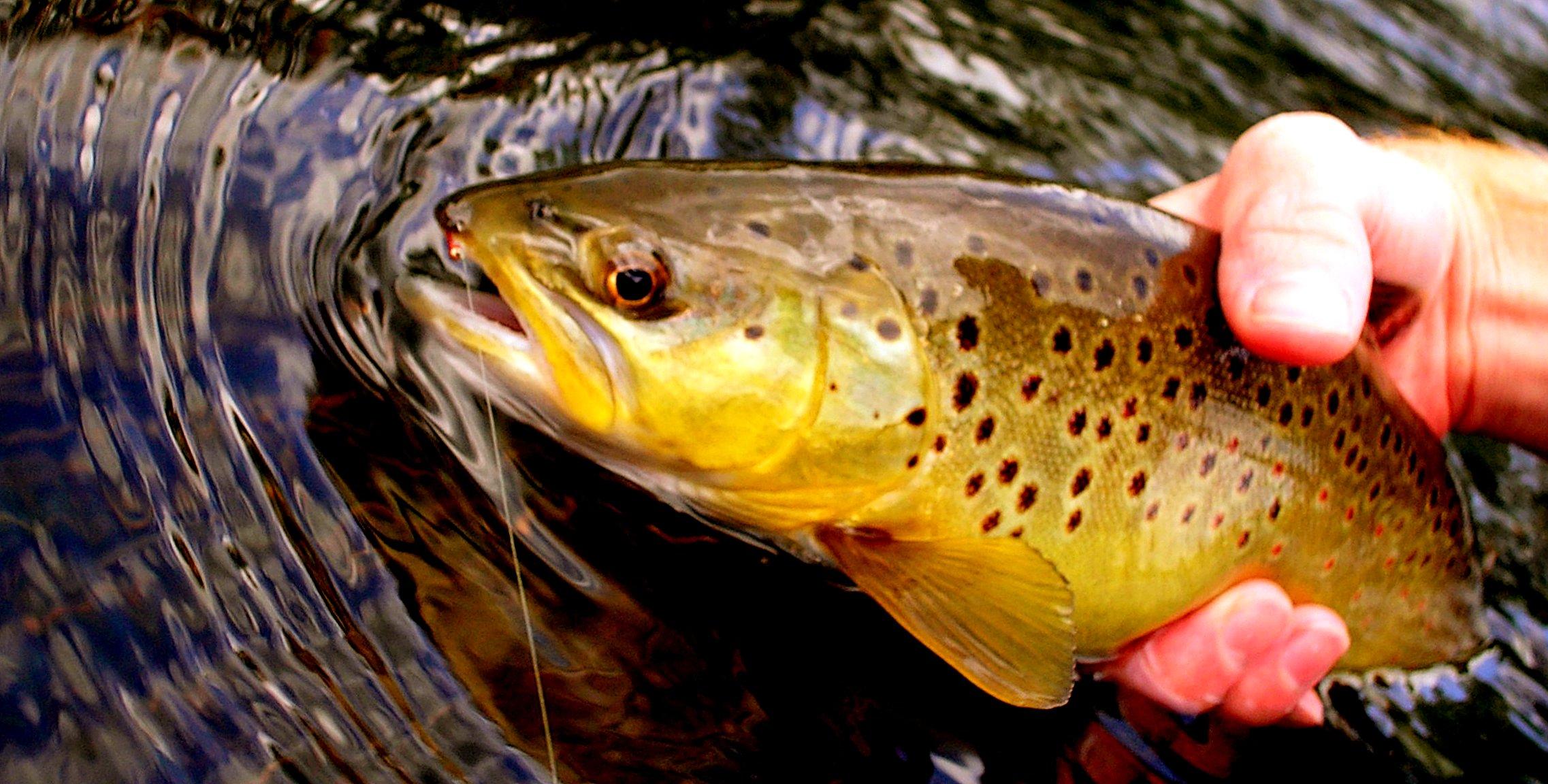 Canyon Creek Arizona Fly Fishing Trout Pro Store