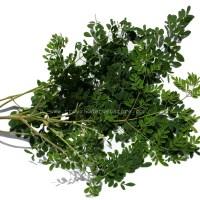100% Pure Dried Moringa/Oliefera Leaves