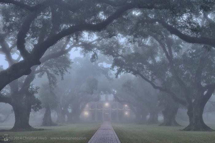 Oak Alley by Christian Heeb