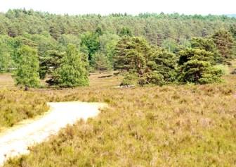 Heide im Buesenbachtal