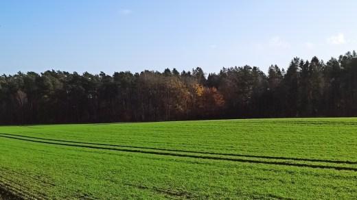Herbstwalk bei Sonnenschein
