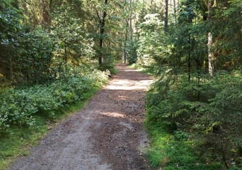 Waldweg zur Hoellenschlucht