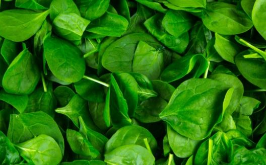 Spinach- Helps weight-loss and reduce obesity due to low in calories