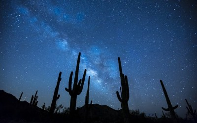 Adaptive Space: How to thrive in the Wild West of the Information Era
