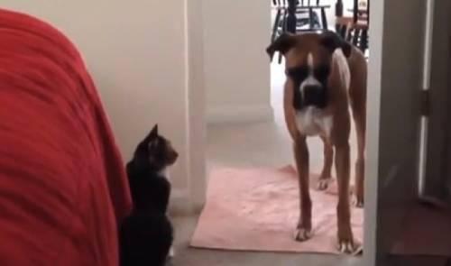 Όταν ο σκύλος φοβήθηκε τη... γάτα (Βίντεο)