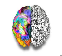 A typical brain with the left side depicting an analytical, structured and logical mind, and the right side depicting a scattere