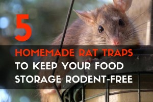 5 Homemade Rat Traps to Keep Your Food Storage Rodent-Free