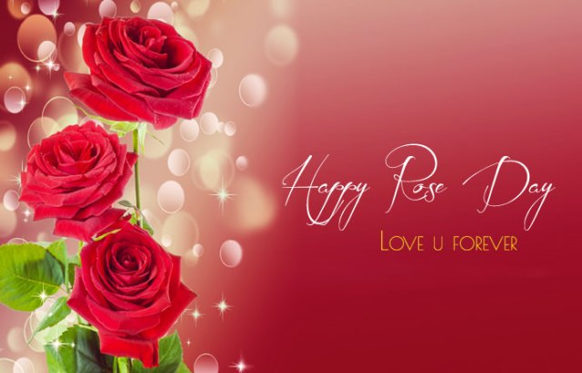 1st Day of Valentine Week Rose Day Pictures - 7th Feb Happy Rose Day Images with Shayari