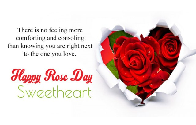 7th Feb Rose Day Messages - 7th Feb Happy Rose Day Images with Shayari