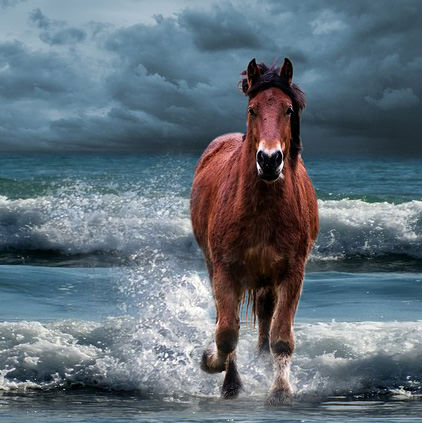 Horse Images For Whatsapp DP Profile With Quotes Slogan