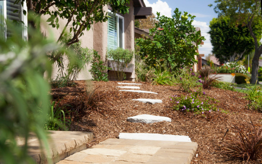 drought tolerant landscaping archives