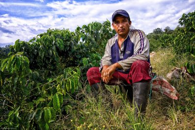 Alejandro Ordóñez takes a break from picking coffee on Hacienda Venecia outside Manizales, Colombia, on Oct 10, 2013. Ordóñez says he picks about 70-80 kg/day and makes 380COP per kilo - a daily pay of about $14-16USD.