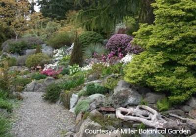 UW Botanic Gardens: Spring Ephemerals at the Elisabeth C. Miller Botanical Garden