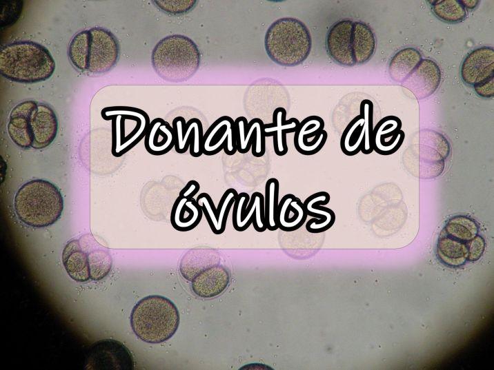 donante-de-ovulos