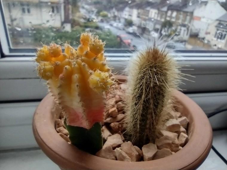 Moto Defy Camera sample cactus